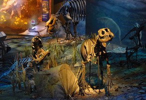 Scene at the Gray TN Fossil Museum